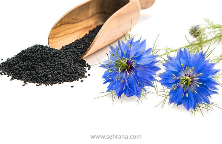 سیاه دانه چیست