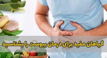 گیاهان مفید برای درمان یبوست را بشناسید
