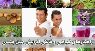 راهکارهای گیاهی و خانگی افزایش میل جنسی
