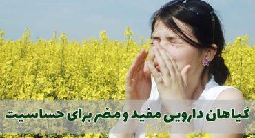 گیاهان دارویی مفید و مضر برای حساسیت